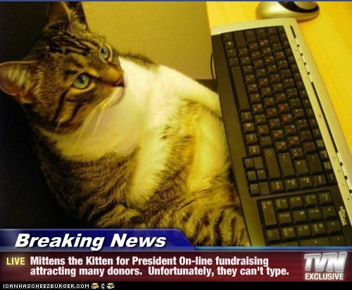 Breaking News - Mittens the Kitten for President On-line fundraising attracting many donors.  Unfortunately, they can't type.