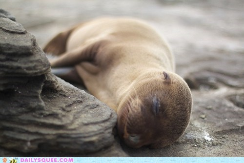 asleep,baby,Pillow,rock,sea lion,sleeping,squee spree,winner