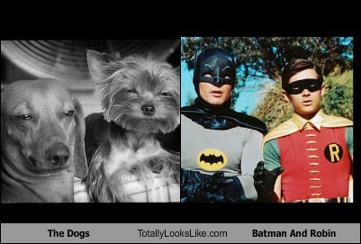 The Dogs Totally Looks Like Batman And Robin