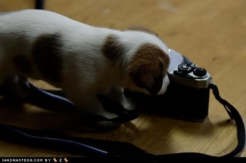 Cyoot Puppeh ob teh Day: Fotografie Stoodent