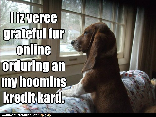 animals,basset hound,credit card,delicious,dogs,i has a hotdog,order pizza,ordering pizza,pizza