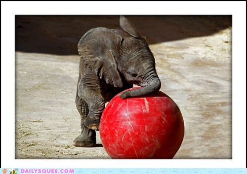 acting like animals,baby,ball,elephant,excuse,explanation,heavy,medicine ball,pushing,sissy,sisyphus,weight
