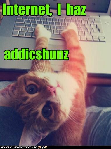 Internet,  I  haz