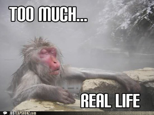 animals,hot springs,Iceland,internet,monkey,real life
