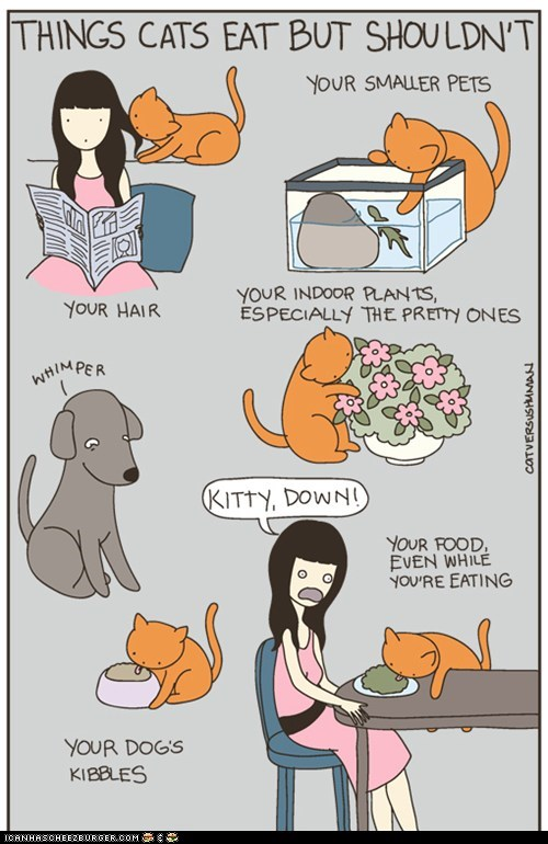 Kitteh Komic ob teh Day: Things Cats Eat But Shouldn't
