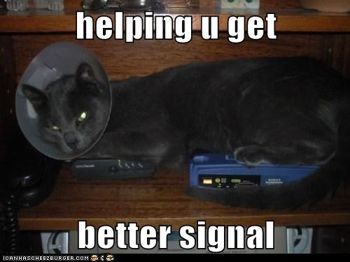 better,caption,captioned,cat,cone of shame,get,helping,internet,router,signal