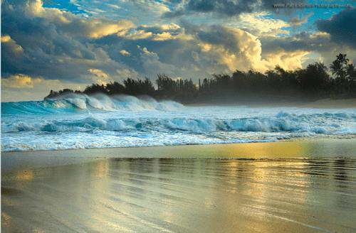Forest,getaways,ocean,trees,unknown location,water,waves