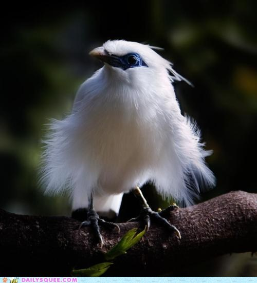 Whatsit Wednesday: Bright White Birdie Whatsit