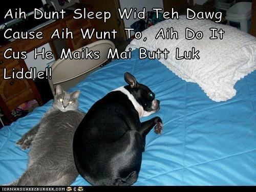 Aih Dunt Sleep Wid Teh Dawg Cause Aih Wunt To, Aih Do It Cus He Maiks Mai Butt Luk Liddle!!