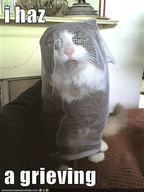 animals,cat,funeral,grief,grieving,I Can Has Cheezburger,mesh bad,Sad,thats-a-bummer-man
