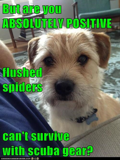 But are you ABSOLUTELY POSITIVE flushed                      spiders can't survive                       with scuba gear?