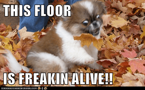 THIS FLOOR   IS FREAKIN ALIVE!!
