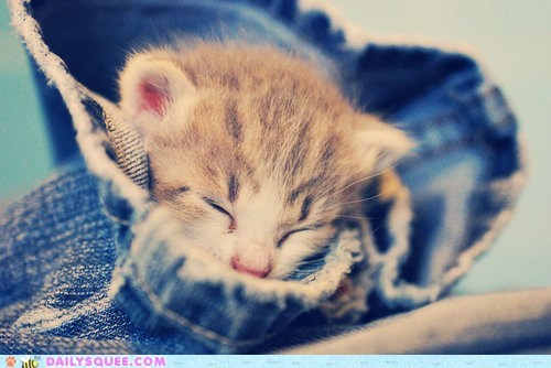 argument,asleep,baby,better,cat,Hall of Fame,improvement,jeans,kitten,logic,pants,sleeping