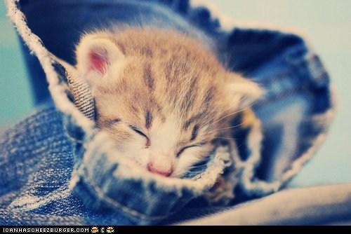 cyoot kitteh of teh day,denim,jeans,sleeping,tiny