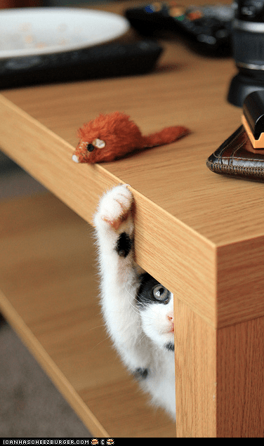 cyoot kitteh of teh day,hiding,mice,peeking,reaching,tables,toys,want,yoink