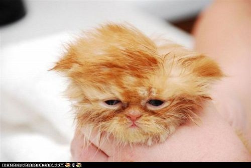 baths,cyoot kitteh of teh day,hands,not happy,orange,Sad,tiny
