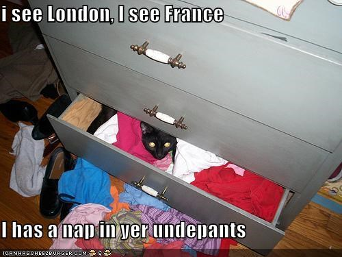 i see London, I see France  I has a nap in yer undepants