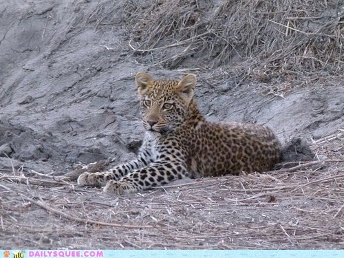 And if a Leopard Doesn't Change His Spots...