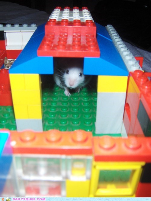 Reader Squees: King of the Lego Castle