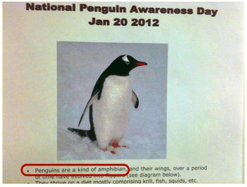 animals,fail nation,g rated,irony,penguin,wtf
