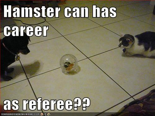 Hamster can has career  as referee??