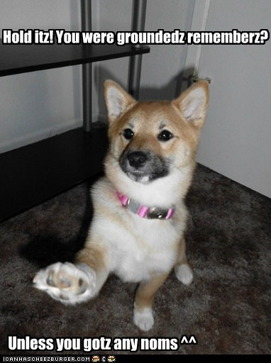 bribe,give-me-noms-and-i-wont-tell,grounded,in trouble,noms,shiba inu,stop right there,whoa