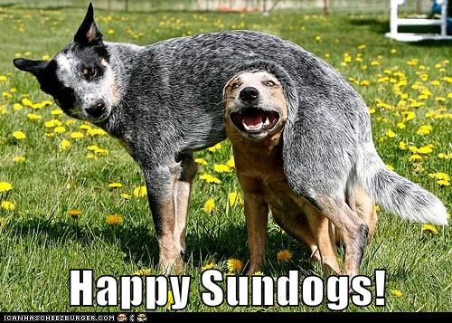 Happy Sundogs!