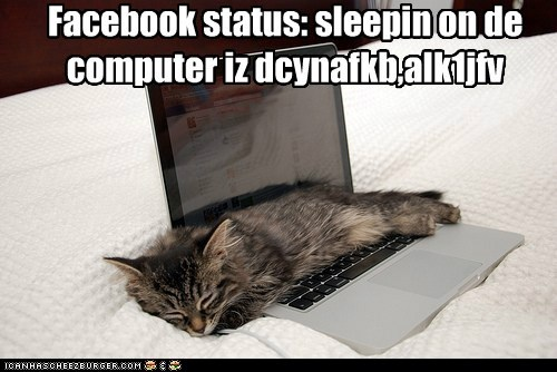 asleep,best of the week,caption,captioned,cat,computer,facebook,Hall of Fame,kitten,laptop,sleeping,status