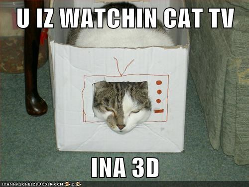 U IZ WATCHIN CAT TV  INA 3D