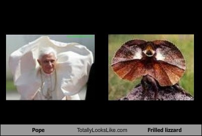 Pope Benedict Totally Looks Like Frilled Lizard