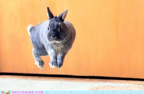 acting like animals,bungee,bunny,happy bunday,jump,jumping,pun,rabbit