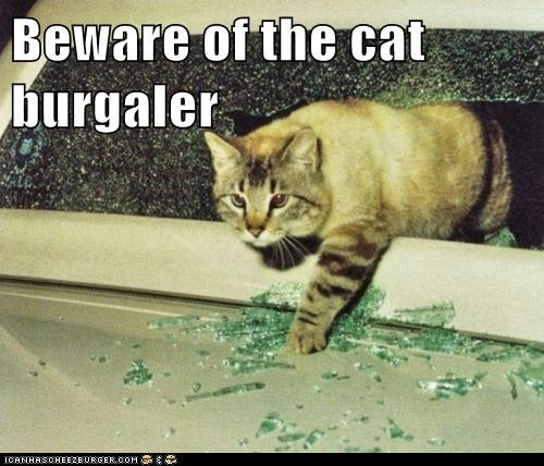 Beware of the cat burgaler