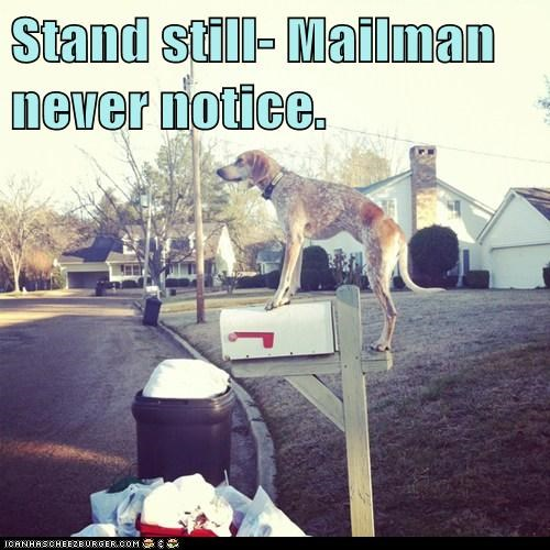 Stand still- Mailman never notice.