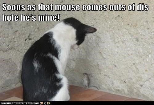 Soons as that mouse comes outs of dis hole he's mine!