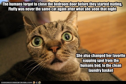 The humans forgot to close the bedroom door before they started mating ...