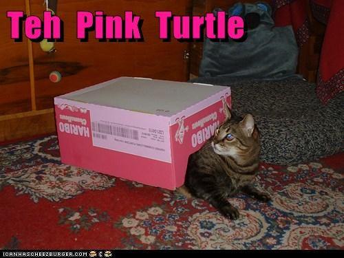Teh  Pink  Turtle
