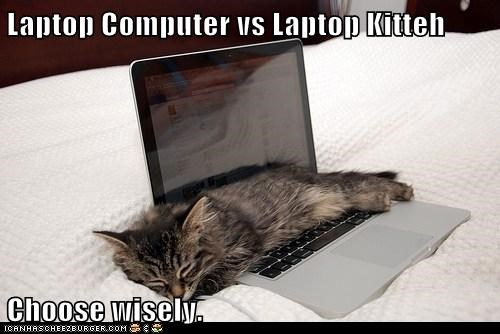 Laptop Computer vs Laptop Kitteh  Choose wisely.