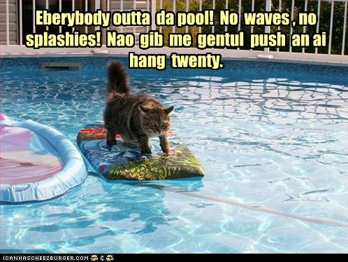 Eberybody outta  da pool!  No  waves , no splashies!  Nao  gib  me  gentul  push  an ai  hang  twenty.