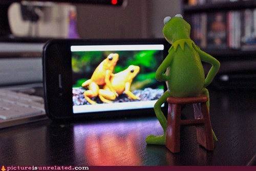 Even Kermit Needs to Relax