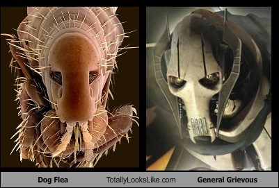 flea,funny,General Grievous,Hall of Fame,star wars,TLL