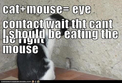 cat+mouse= eye contact wait tht cant be right I should be eating the mouse