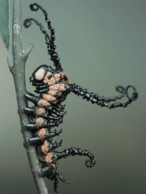 Caterpillar vs. Venom of the Day