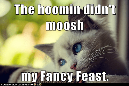 First World Cat Problems: U No Moosh, Me No Eats!