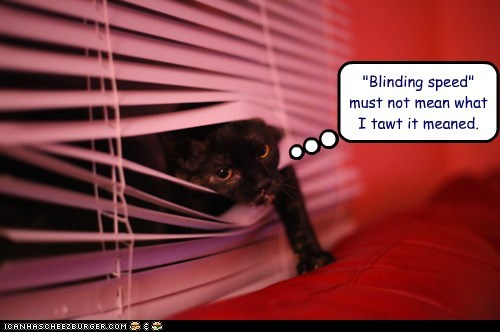 blinding,blinds,caption,captioned,cat,confused,mean,meaning,pun,speed,stuck