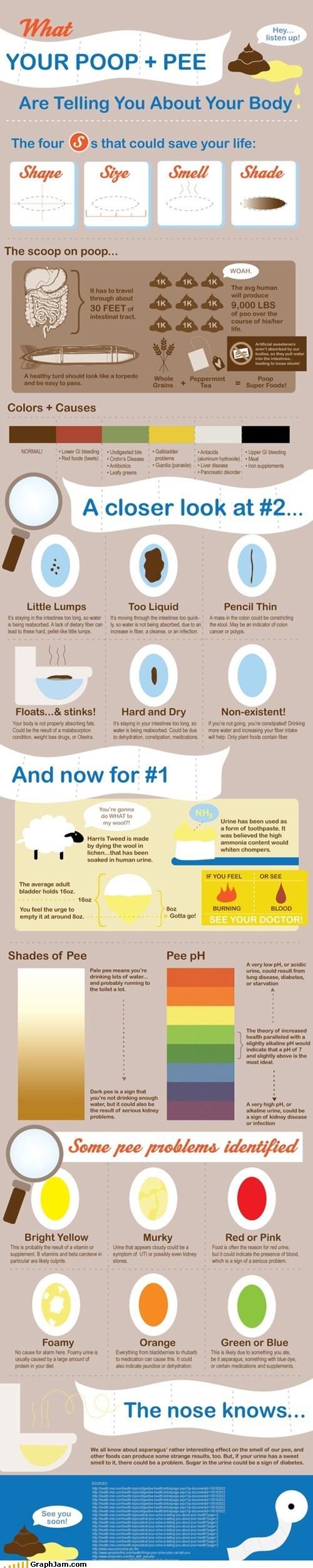 bathroom,best of week,infographic,pee,poop