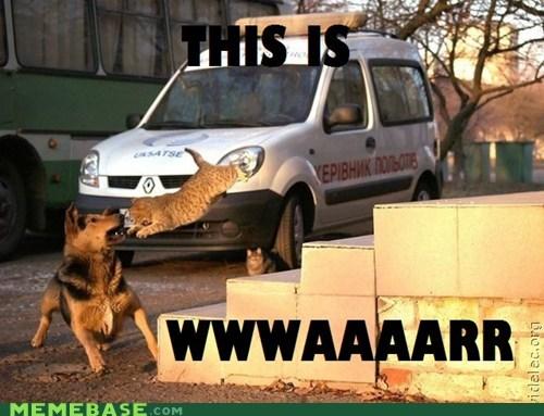 cat,cute,dogs,mauling,Memes,war