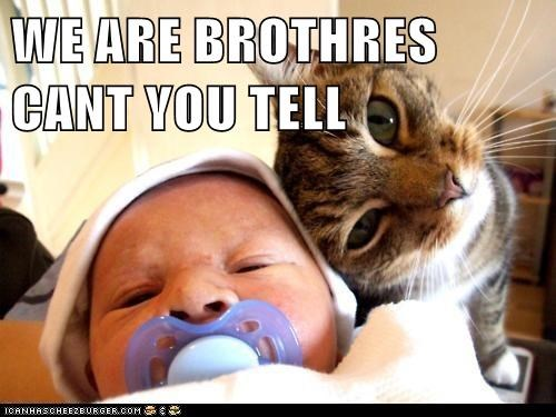 cat,baby,brothers