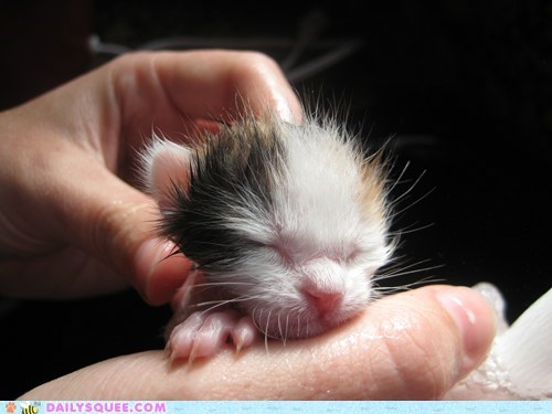 Reader Squees: Itty Bitty Kitten's First Bath