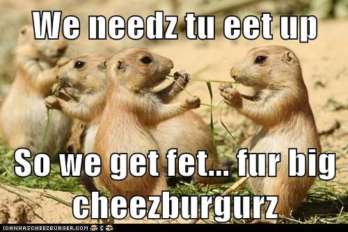We needz tu eet up  So we get fet... fur big cheezburgurz