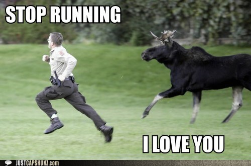 animals,chase,i love you,moose,run,running,stop running